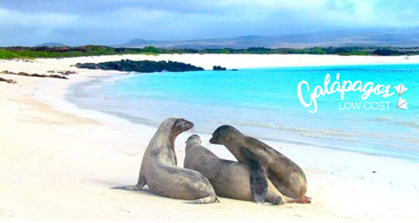 tortuga bay beach santa cruz the galapagos islands